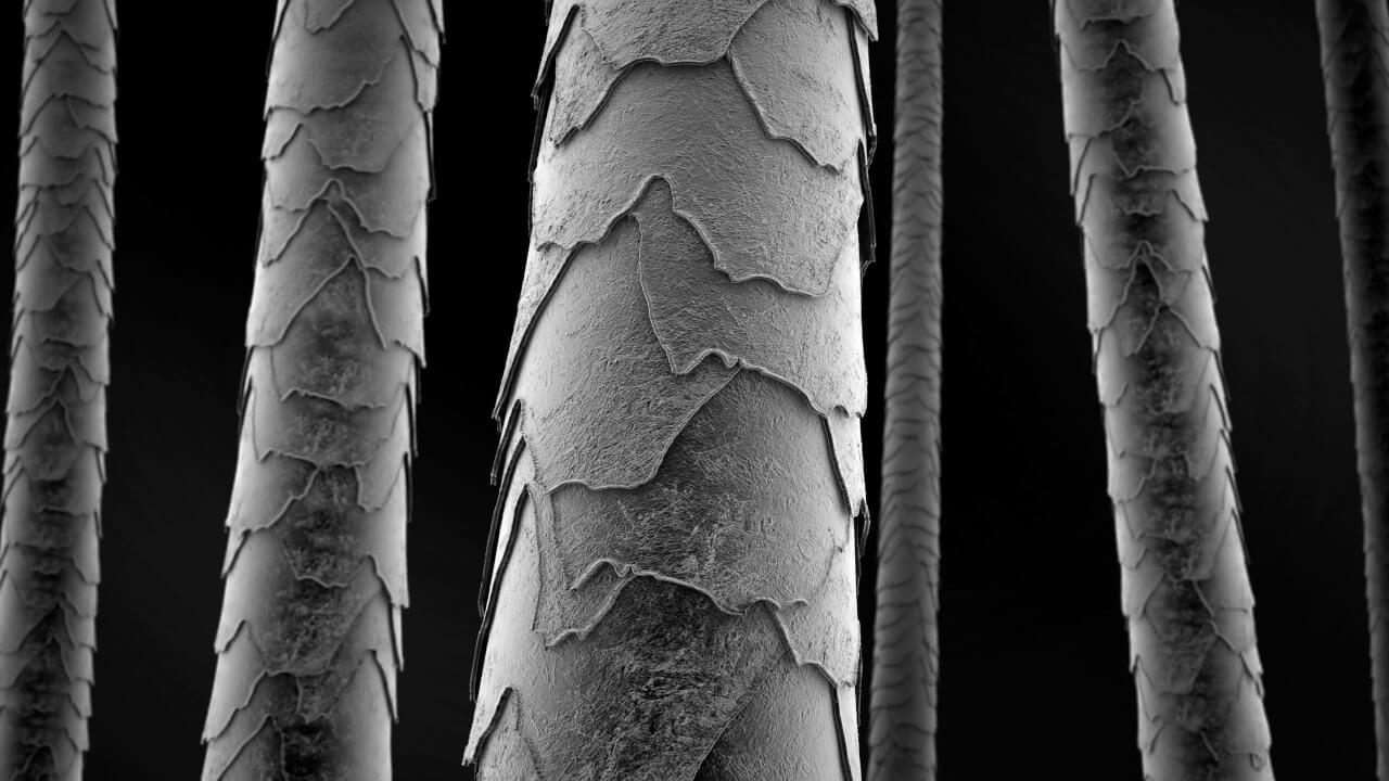 La parte di ciglio che sbuca dall'epidermide è praticamente materiale inerte