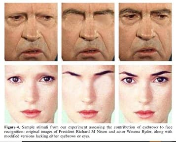 The Role of Eyebrows in Face Recognition